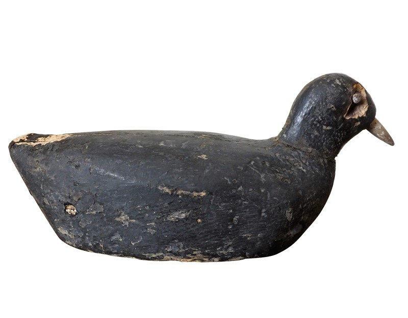 Antique coot decoy-adps-antiques-3549-view-2-main-637017559062956959.jpg