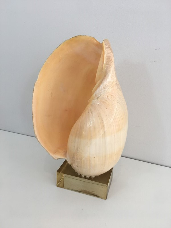 Decorative Shell on Stand-barrois-antiques-50s-34559-main-637024415187878704.JPG