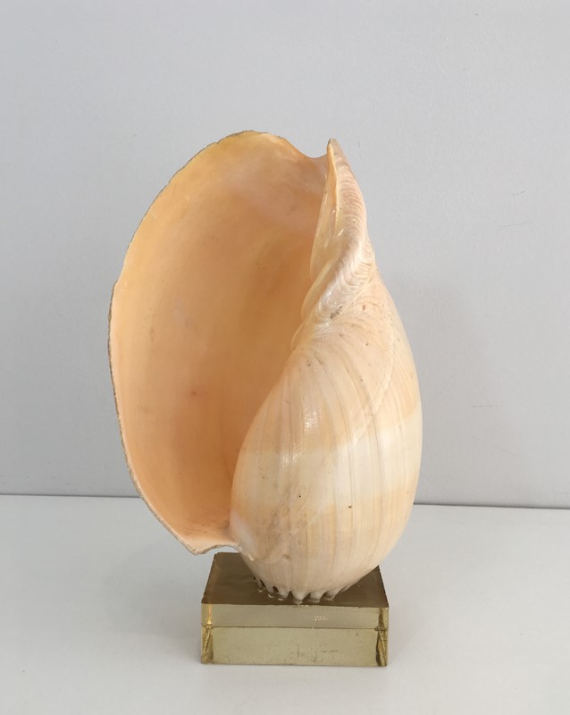 Decorative Shell on Stand-barrois-antiques-50s-34560-main-637024415387097237.JPG