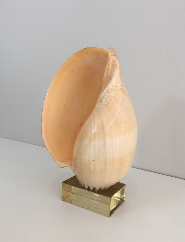Decorative Shell on Stand-barrois-antiques-50s-34561-main-637024415490380349.JPG