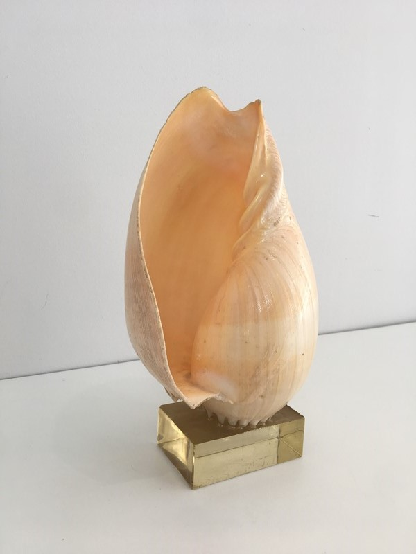 Decorative Shell on Stand-barrois-antiques-50s-34562-main-637024415662253281.JPG