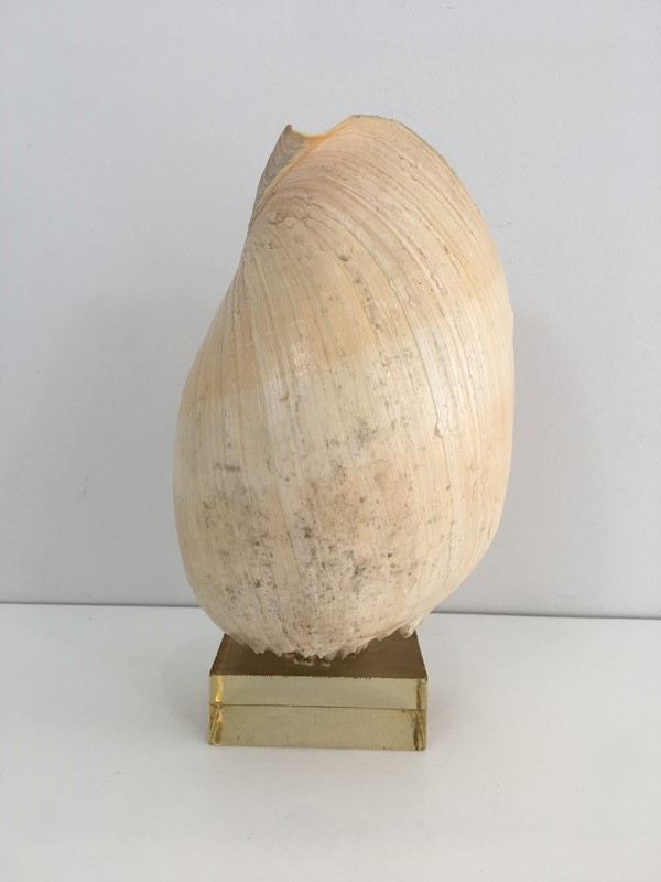 Decorative Shell on Stand-barrois-antiques-50s-34563-main-637024415887096391.JPG