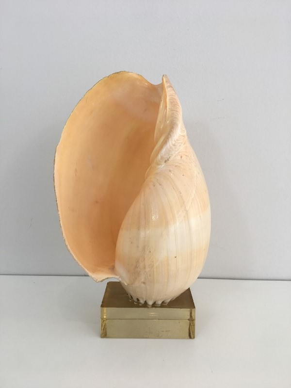 Decorative Shell on Stand-barrois-antiques-50s-34568-main-637024416441319068.JPG