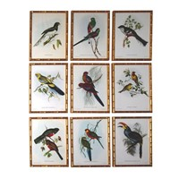 A Fine Set of 9 Exotic Bird Lithographs