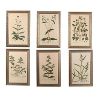 A Fine Set of William Curtis Botanicals