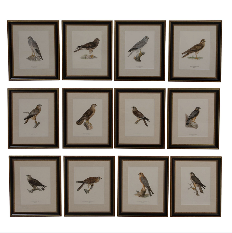 Set of 12 Chromolithographs of Birds of Prey-christopher-hall-antiques-screenshot-2019-06-30-201145-main-636975224041008239.png