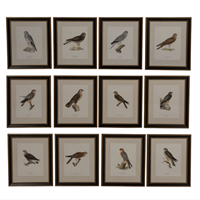 Set of 12 Chromolithographs of Birds of Prey