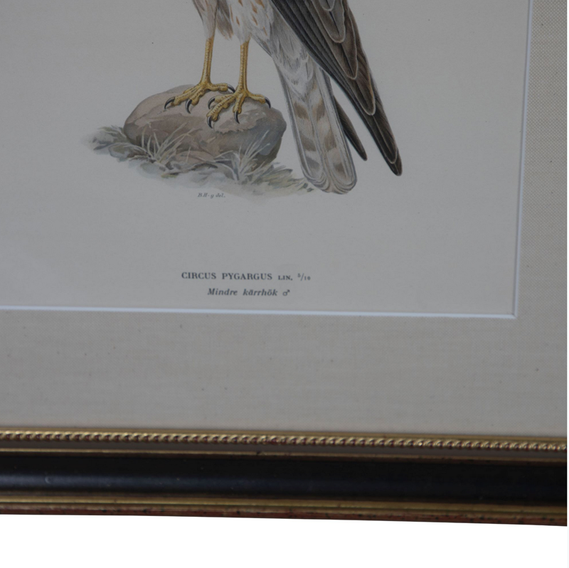 Set of 12 Chromolithographs of Birds of Prey-christopher-hall-antiques-screenshot-2019-06-30-201428-main-636975224968033479.png