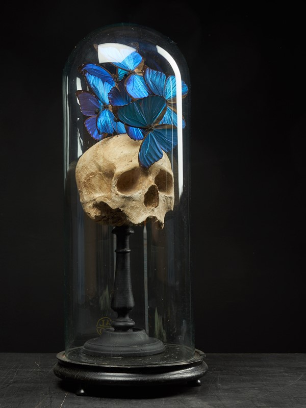 Composition of Plaster Skull decorated with Beetle-collectit-by-spectandum-001314-01-2mb-main-637283627045328201.jpg