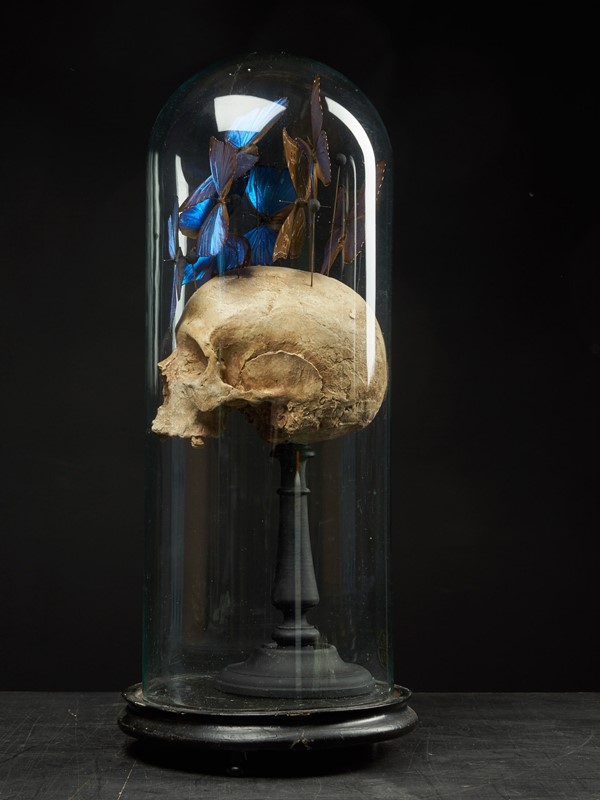 Composition of Plaster Skull decorated with Beetle-collectit-by-spectandum-001314-04-2mb-main-637283630561152650.jpg
