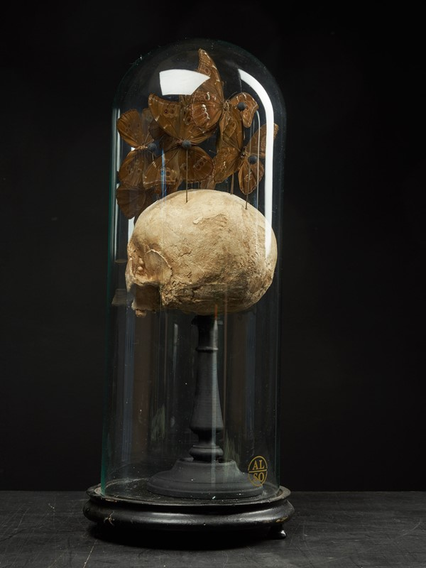 Composition of Plaster Skull decorated with Beetle-collectit-by-spectandum-001314-05-2mb-main-637283630575371637.jpg