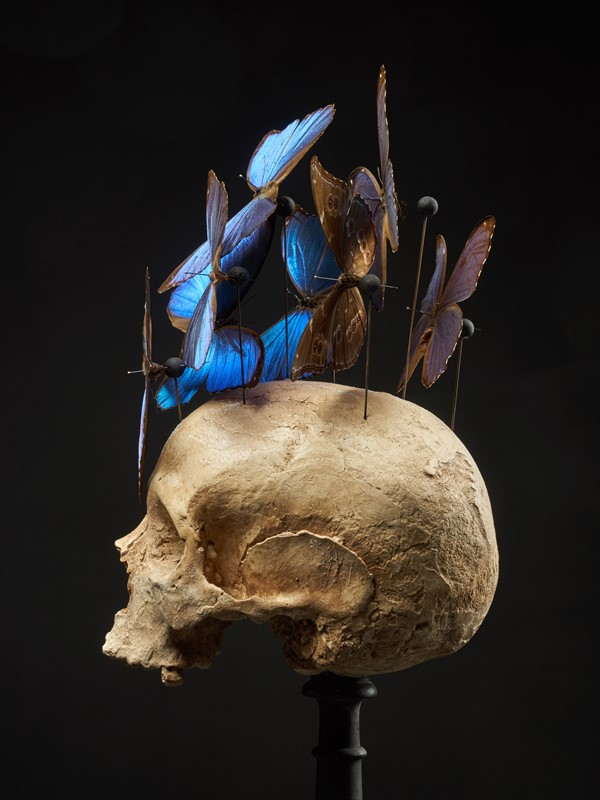Composition of Plaster Skull decorated with Beetle-collectit-by-spectandum-001314-10-2mb-main-637283631850464665.jpg