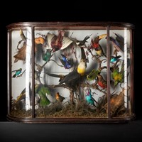 Taxidermy Composition of Exotic Birds in a box