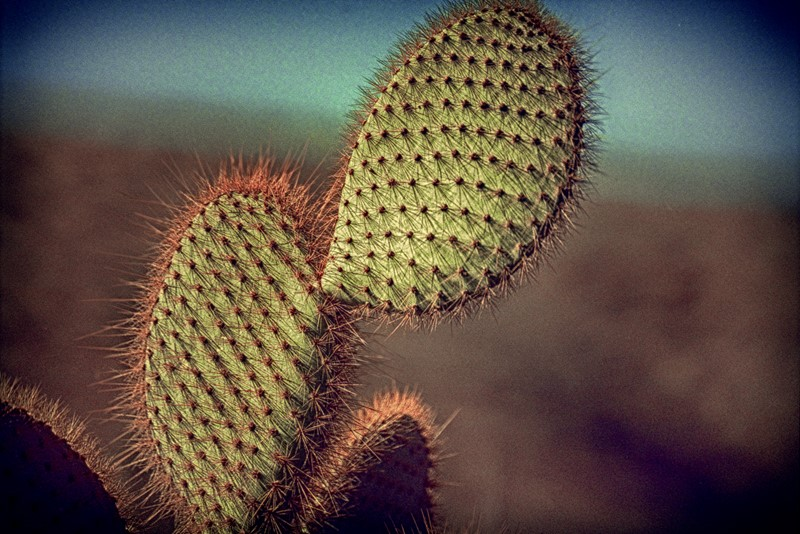 Colour photograph of Cacti-dc-photography-jc14-cacti-main-637067677588519845.jpg