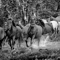 Group of Wild Ponies