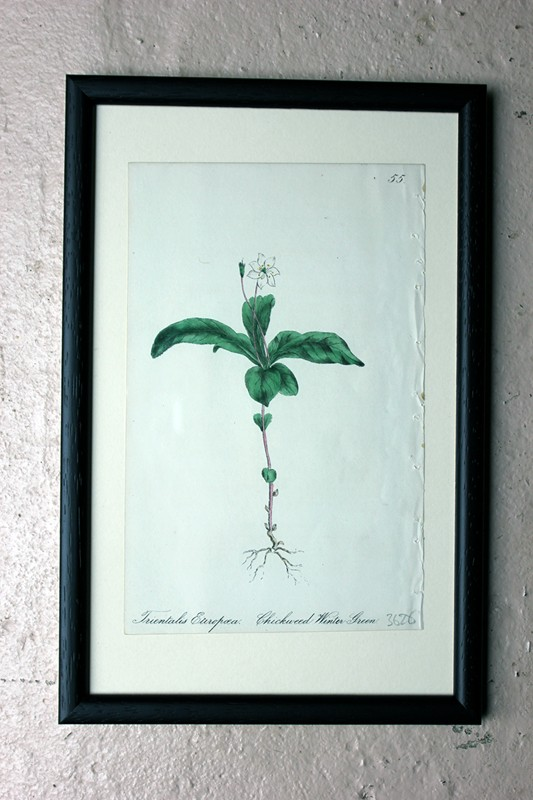 12x Mid-19thC Hand-Coloured Botanical Lithographs-doe-and-hope-groupoftwelvebotanicallithographs24-main-636710558722252668.jpg