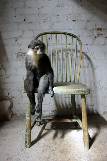 'The Waiting Room'-doe-and-hope-lhoestsmonkeyonchair10_main_636311401649665236.jpg