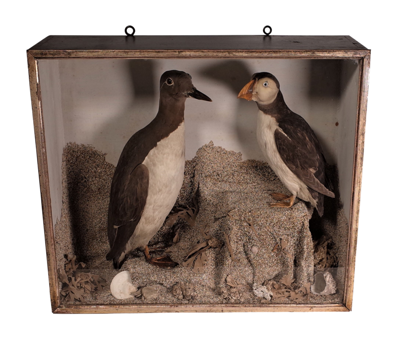 Cased Taxidermy Birds-fontaine-decorative-fon3370-a-webready-main-637100196160109243.png