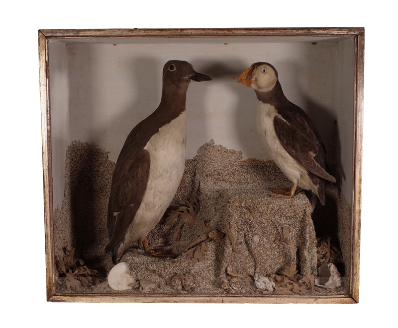 Cased Taxidermy Birds-fontaine-decorative-fon3370-b-webready-main-637100196244640844.png