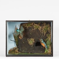 Victorian Taxidermy Kingfishers