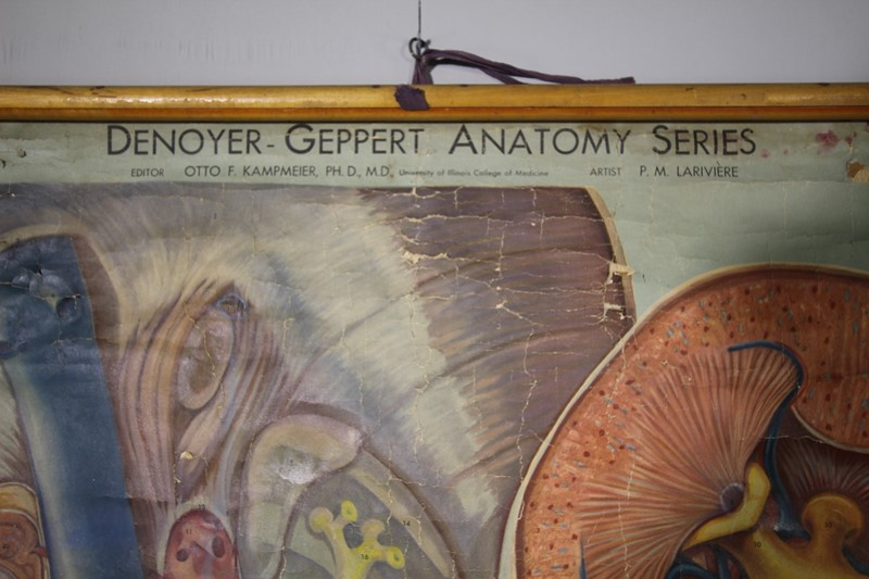 1940's Large American Anatomy Chart -miles-griffiths-antiques-img-1392-1500x1000-main-636842703052033970.jpg