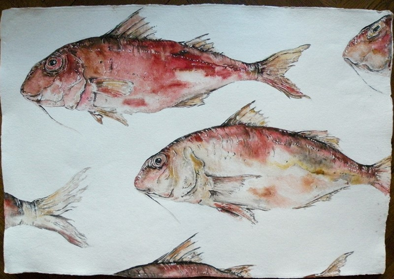 large original watercolour ' Red Mullet '-mountain-cow-DSCN1112-main-636749307036726487.jpg