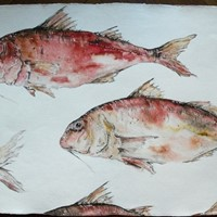 large original watercolour ' Red Mullet '