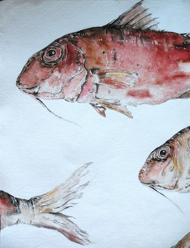 large original watercolour ' Red Mullet '-mountain-cow-DSCN1113-main-636749307394438585.jpg