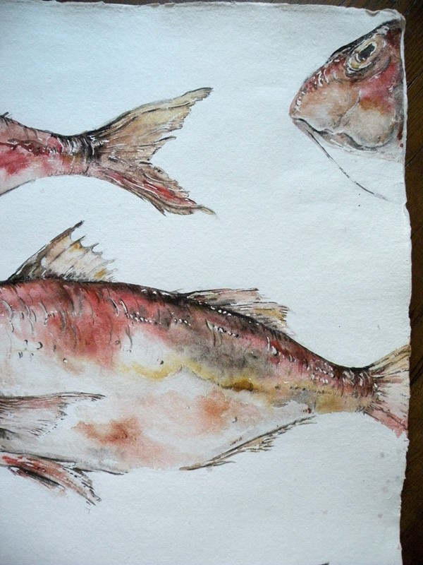 large original watercolour ' Red Mullet '-mountain-cow-DSCN1114-main-636749307422101726.jpg
