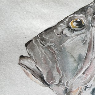 Large watercolour of John Dory (2)