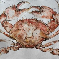 large original watercolour of a cooked crab