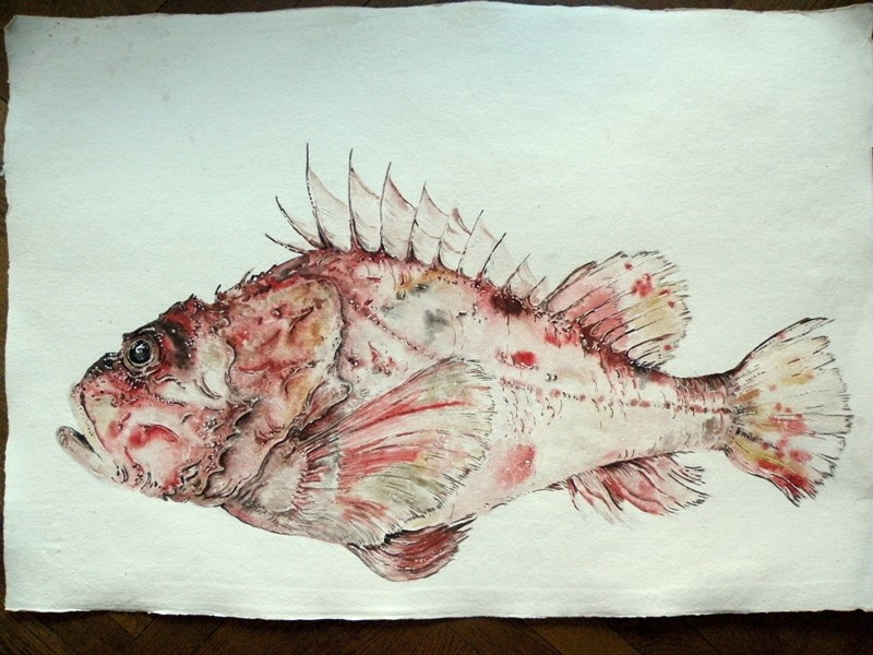 large original watercolour ' Red Mullet '-mountain-cow-mountain-cow-DSCN1107-main-636749309838823777_large-main-636749351896589840.jpg