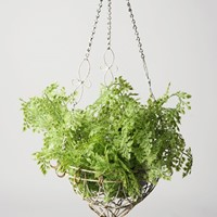 Antique wirework hanging basket