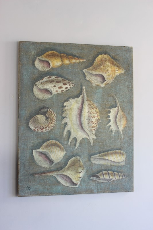 Lovely greygreen painting of shells-norfolk-decorative-antiques-IMG_4363-main-636770968525599850.jpg