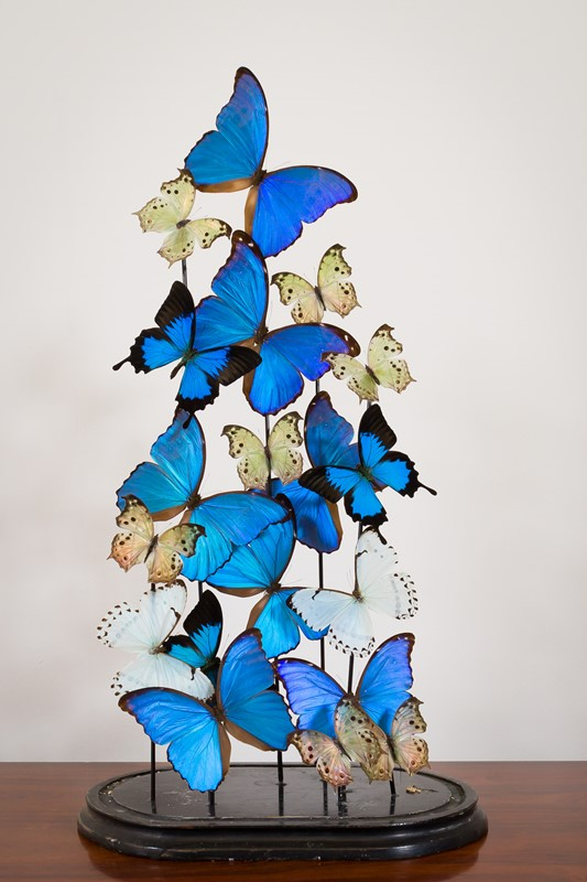 Modern - Blue Butterfly Dome No.20-pure-white-lines-pwl-200523---img-8148-main-637266952736783584.jpg