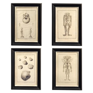 Set of Four 18th C. Framed Anatomical Engravings