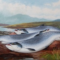 Oil on Canvas Salmon on the Beat By J B Russell St