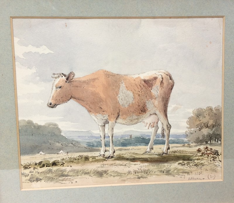 Cow Watercolour-the-lacquer-chest-img-9155-main-636978476618116562.jpg
