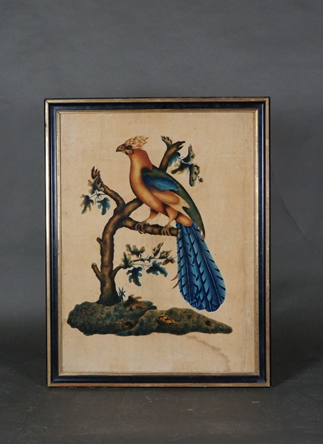 19th Century Paradise-Bird Painting-uwe-dobler-interiors-BildVogel02_main_636538790586721615.jpg