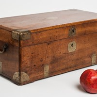 Smallest Camphorwood Trunk